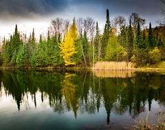 Moment of glory . . . (Dr. Farnsworth) Tags: ruggpond kalkaska calm water dam larch tamarack deciduous conifer drab sky fernridge mi michigan fall october2017