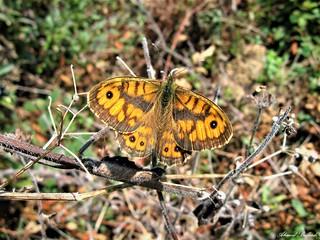 Butterfly 1460
