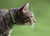 'Green Candy Crush' (Jonathan Casey) Tags: grass collar d810 kitten 200mm f2 vr