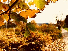 California Dreaming (sjpowermac) Tags: październik sen liście polska jesień pkpintercity eu07 złota golden leaves autumn river vistula warszawa californiadreaming