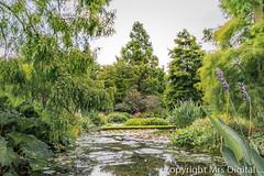 Mrs Digital Beth Chatto Garden (22 of 102) PF.jpg (Mr and Mrs Digital) Tags: garden bethchatto vista flowersplants water flower summer view pond coth