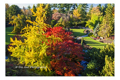 Colors of Fall (PhotoDG) Tags: color fall season leav maple tree queenelizabethpark vancouver autumn