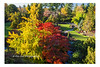 Colors of Fall (PhotoDG) Tags: color fall season leav maple tree queenelizabethpark vancouver autumn