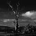 The Lighning Tree