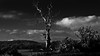 The Lighning Tree (Neil. Moralee) Tags: neilmoraleenikond7200 neilmoralee tree dead lightning dark sinister old vountryside field landscape england herefordshire sky clouds black white bw blackandwhite mono monochrome nikon d7200 neil moralee hills uk lightningtree bolt