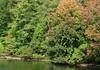 IMG_9503b (Naturecamhd) Tags: canonpowershotsx60hs sx60hs newyorkbotanicalgarden nybg twinlakes botanicalgarden green eco nature trees fall autumn bronx thebronx