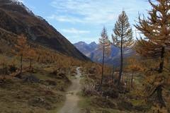 Lötschental (bulbocode909) Tags: valais suisse lötschental montagnes nature automne paysages sentiers arbres mélèzes nuages jaune orange bleu forêts