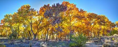 Rio Grande Bosque (JoelDeluxe) Tags: tingley beach abq bosque albuquerque dukecity nm newmexico biopark ponds fall colors red orange yellow green blue ducks wildlife fishing recreation landscape panorama hdr joeldeluxe glowing golden color