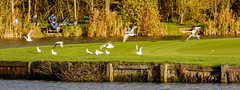 Hampton In Arden 5th November 2017 (boddle (Steve Hart)) Tags: stevestevenhartcoventryunitedkingdomcanon5d4 hampton in arden 5th november 2017 steve hart boddle steven bruce wyke road wyken coventry united kingdon england great britain canon 5d mk4 6d barston unitedkingdom gb 100400mm is usm ii 2470mm standard 815mm fisheyes lens 1635mm l wideangle wide angle wild wilds wildlife life nature natural bird birds flowers flower fungii fungus insect insects spiders butterfly moth butterflies moths creepy crawley winter spring summer autumn seasons sunset weather sun sky cloud clouds panoramic