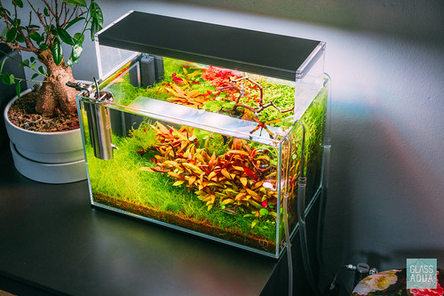 ultum nature systems 5n rimless nano aquarium tank a photo on