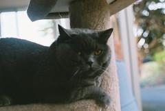 B008612-R2-09-16 (jimmmyange) Tags: winston cat kodak 400 gold fujica stx1 fujifilm