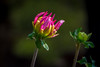 nacido (Pejasar) Tags: bloom nacido born birth blossom two flowers estespark colorado