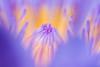 內芯世界 Inner World (Laban.tw) Tags: 臺北市 台北市 台灣 tw 子午蓮 水芹花 瑞蓮 水洋花 小蓮花 睡蓮 nymphaeatetragona waterlily 台北植物園 taipeibotanicalgarden flower