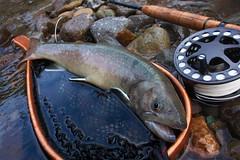 Iwana35 DSC_4061 (touhenboku) Tags: iwana fly fishing flyfishing stream river creek brodin lamson waterworks