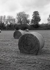 hay you! (OhDark30) Tags: olympus 35rc 35 rc film monochrome 35mm bw blackandwhite bwfp hay bales field trees countryside harvest autumn oxon thamespath kelmscott