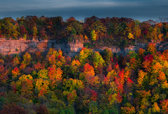 Transboundary treescape (snowyturner) Tags: ontario niagara river ridge trees autumn rocks evening colours fall