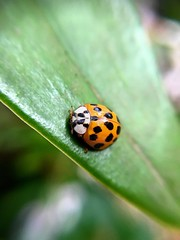 Little friend (v.bastos22) Tags: nature friend bug natureza amiguinho inseto joaninha