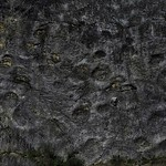 Dinosaur Footprints thumbnail