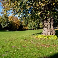 alte Buche im Schlosspark (p.schmal) Tags: olympuspenf ahrensburg schloss schlosspark herbst