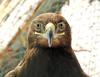 Smile (markb120) Tags: bird fowl flyer flier plumage feathering feather coverts coat dress beak bill pecker rostrum neb nib eye head animal fauna