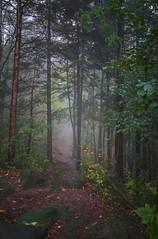 sentier / Path (cébé céline) Tags: sentier automne saison nature urbaine nikond7200 érables paysage urbain parc du montroyal montréal ville forêt brouillard feuilles feuillage morning