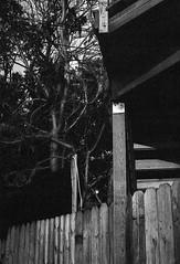 (VonLiviu) Tags: chicago city bw blackandwhite film shootfilm kodak tmax develop art nature chicagophotographer grain moody dark summer hot nikon nikonphotography nikonfe fe geometry framing composition cityscape contrast
