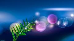 Light (YᗩSᗰIᘉᗴ HᗴᘉS +10 000 000 thx❀) Tags: drop droplet bokeh light green blue macro yasminehens pink creative dream dreaming 7dwf