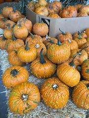 290/365: A Little Bit Warty - Explored! (jchants) Tags: 365the2017edition 3652017 day290365 17oct17 pumpkins orange halloween