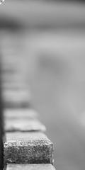 08092017_hermingp_0185_mL (speschlphotography_art) Tags: focuspoint focus einfach simpel minimalistisch minimalism mauer stein begrenzung wall grey grau rauh void noting bw sw 2017 151117a