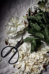 (Rebecca Watson Photography) Tags: beauty fleeting moment imperfection perfectlyimperfect flowers cuttings