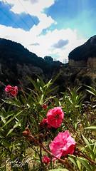 Kreta- Rethimnon (gabimartina) Tags: kreta griechenland landschaft natur blüten bäume berge gebirge creta mountains
