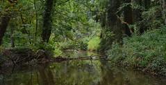 Dutch jungle (henkmulder887) Tags: bovenslinge bekendelle landgoedbekendelle beek meander achterboek oerbos jungle winterswijk gelderland guelders holland thenetherlands ijsvogel paddenstoelen groen bos wandelen