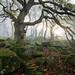 Enter my forest (J C Mills Photography) Tags: peakdistrict derbyshire forest woodland ancient oak trees mist fog light gnarly landscape creepy rocks moss