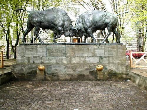 2bulls ©  serge.zykov