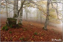 Aralar, nieblas otoñales (PacoSo) Tags: otoño natura naturaleza nieblas parquenaturaldearalar navarra pacoso