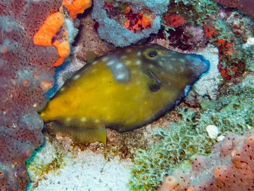 Unterwasserwelt, Portsmouth, Nordwestküste, Dominica