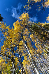 Fall foliage in Rocky Mountain National Park