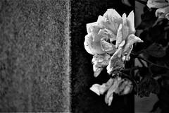 Höstfotografering (lena.fredin) Tags: fs171015 hostfoto fotosondag