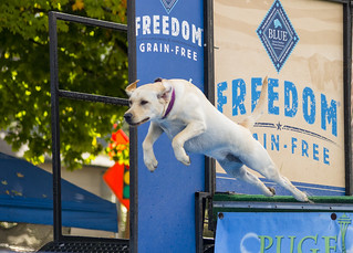Dock Dogs at Issaquah Salmon Days