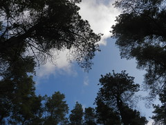 Through the Trees, Airlie, Kirriemuir, Sep 2017 (allanmaciver) Tags: sky weather blue trees height pov airlie monument kirriemur angus silhouettes allanmaciver