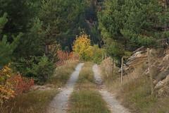 Plan Lajeur (bulbocode909) Tags: valais suisse planlajeur montagnes nature automne chemins forêts arbres vert jaune rouge
