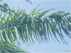 bird net (b. inxee♪♫) Tags: plam bird net