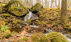 Petit ruisseau dans la Vallée / Small stream in the Valley (Pierre Lemieux) Tags: québec canada ca parcnationaldelajacquescartier ruisseau stream vallée valley eau water