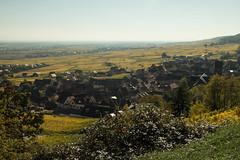 Gueberschwihr (explored 2017.10.19) (Gisou68Fr) Tags: gueberschwihr alsace france hautrhin village dorf elsass vignoble vignes vines vineyard yellow canoneos650d 68 weinberg