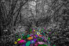 Siggy Pop (marksmorton) Tags: flower flowers color colorburst travel wanderlust log blackandwhite art forest sky leaves fall autumn adventure hike walk walker hiking mountain europe