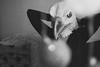B i r d (Mathosse) Tags: bw monochrome bird mask girl 35mm contrast black white portrait