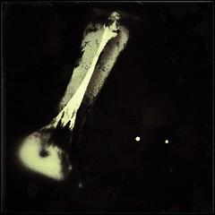 """""""Lucy""""-11668 (Poetic Medium) Tags: nature skeleton square stilllife organic kitcamghostbird missinglink multipleexposure snapseed ipod bones"""