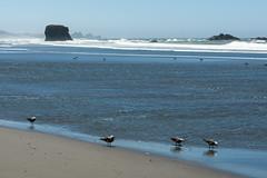 Hwy 101 CA-OR July 2018-52 (ntisocl) Tags: 2017 canon1dmarkiii canonef2470mmf28lusm hwy101 oregon oregoncoasthwy oregoncoast pacificnorthwest pacificocean pistolriverbeach coastline roadtrip sand seagulls waves