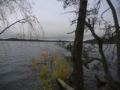 PA260660 (Asansvarld) Tags: mälaren stockholm skärholmen vårberg fall autumn höst vatten water olympusomdem5 microfourthirds