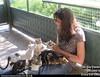 Crazy Cat Ladies (Chikkenburger) Tags: icanhas animals cats kitties lolcats lol funny cheezburger chikkenburger